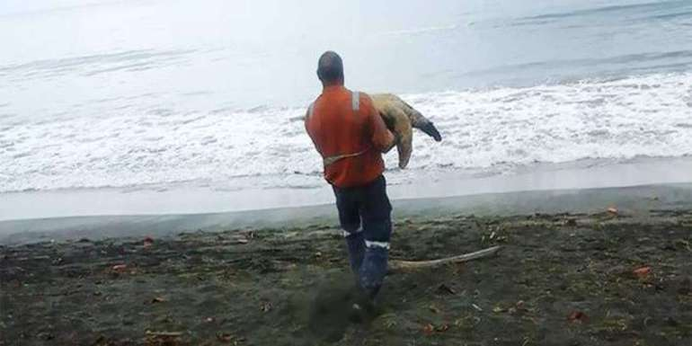 Man Buys Turtles From Food Market And Releases Them Back To The Sea.-1