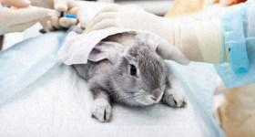 cosmetics_animal_testing