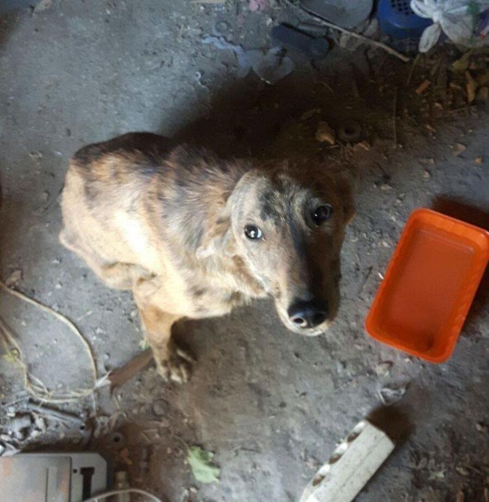 woman-finds-dog-broken-spine-greece-3