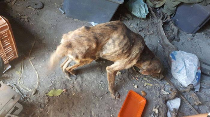 woman-finds-dog-broken-spine-greece-5