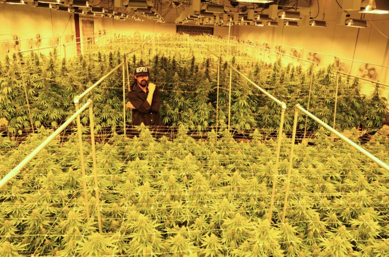 damian-marley-is-converting-a-california-prison-into-a-marijuana-farm1