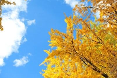 第3期 即日満員につき、10月12・13日に第4期「人生を劇的に変える!超実践2daysワークショップ」を緊急開催します!!