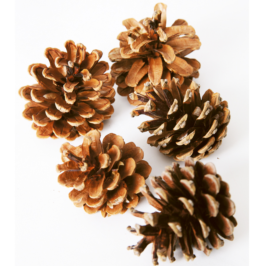 Make Your Own Quote Wallpaper Free Buy Natural Pine Cones Tts International