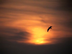 sunset-flight-1315757