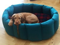 Buy the correct size dog bed - Tuffies dog bedsTuffies dog ...