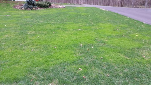Medium Of Gypsum For Lawns