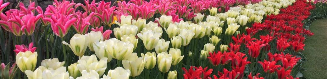 Fall Flower Bulbs Spring Flowering Bulbs Tulips
