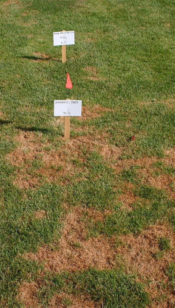 Top 5 Common Lawn and Turfgrass Diseases - Turf