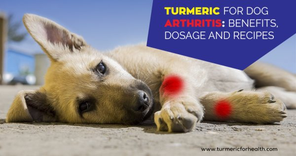 Turmeric for Dog Arthritis 8 Evidence Based Benefits, Dosage and
