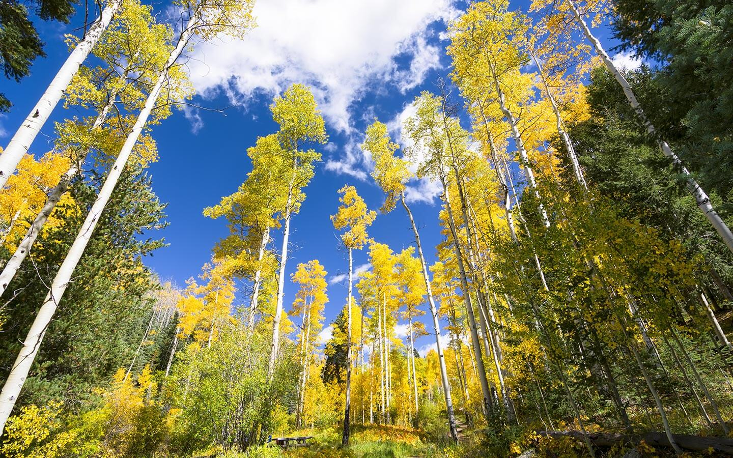 Fall Mountaons In The Sun Wallpaper Your Guide To The Holidays In Santa Fe Top Events
