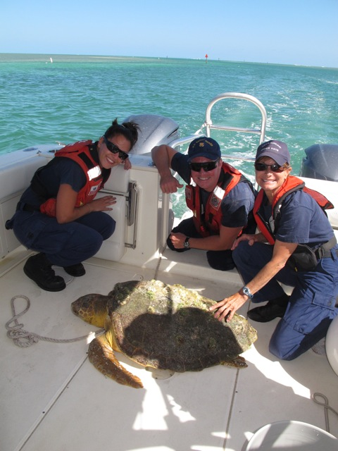 An Amazing Rescue For Taco With Video The Turtle