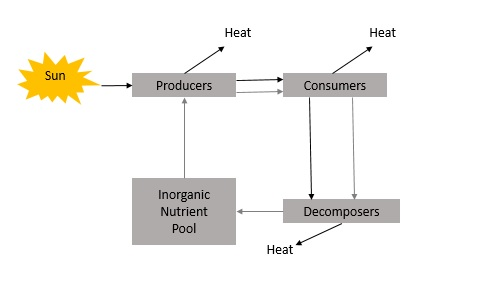Environmental Studies Energy Flow in Ecosystem