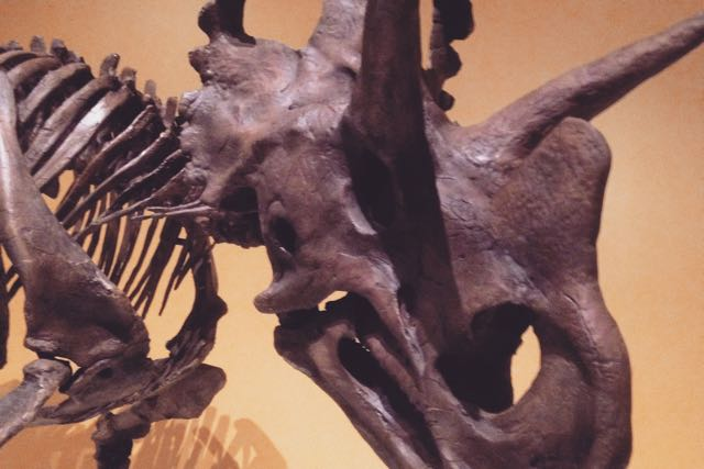Dino_Hunt