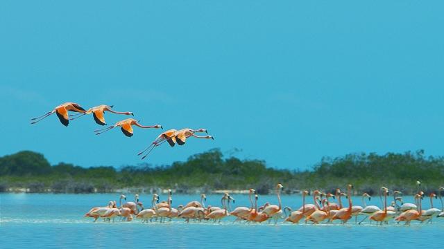 BB_Mangroves_Flamingos