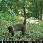 Spying on the Rainforest: Using Trail Cameras in Costa Rica