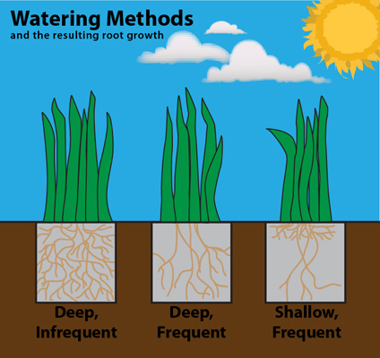 Texas SmartScape Watering and Conservation Guide