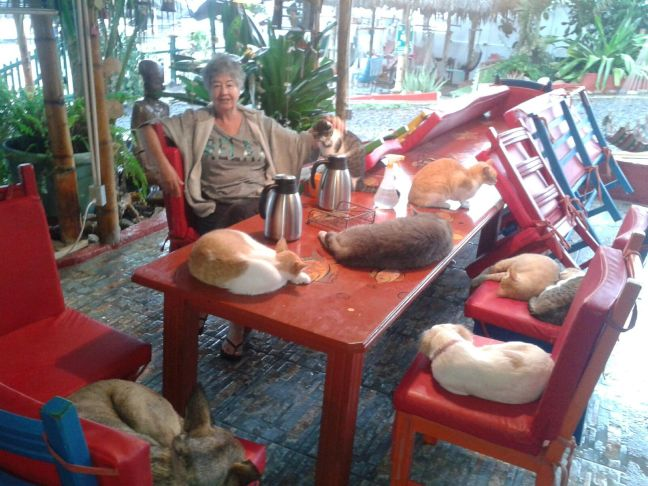 Linda and Her Some of Her Cats