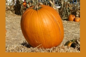 It's Coming to Calabasas – The Annual Pumpkin Festival