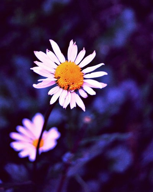 Pictures of flowers that 39 ll tug at your heartstrings - Flowers that bloom only at night ...