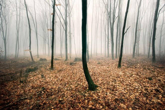 Woods | Akos Major Photography