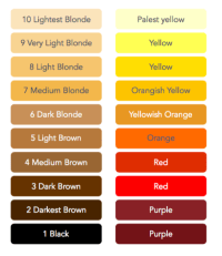 Bleaching Hair Color Level Chart - Image Of Hair Salon and ...