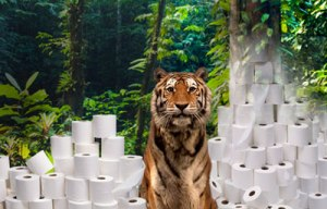 tiger with toilet paper