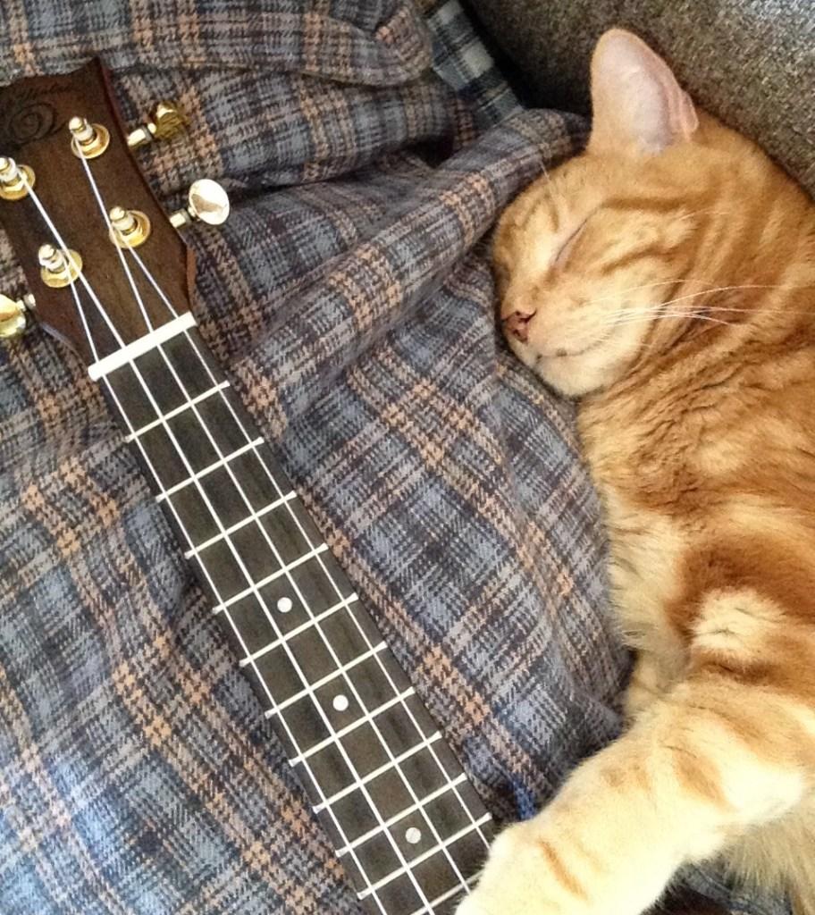 Rusty sleeping with Snail ukulele