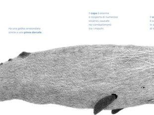 Andrea Antinori balene