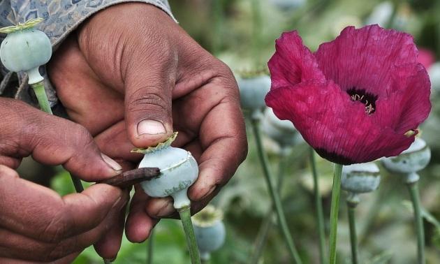 Farmaci: esperti, in Italia dipendenza da oppiacei falso problema