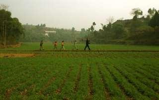 A man, followed by his grandchildren, walk through a rice field in China. Photo: FAO/Antonello Proto