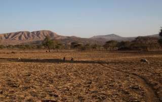Photo: Drought associated with the El Niño phenomenon has severely affected Arsi, Ethiopia.