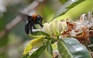 Photo: A bee does its business in Kenya