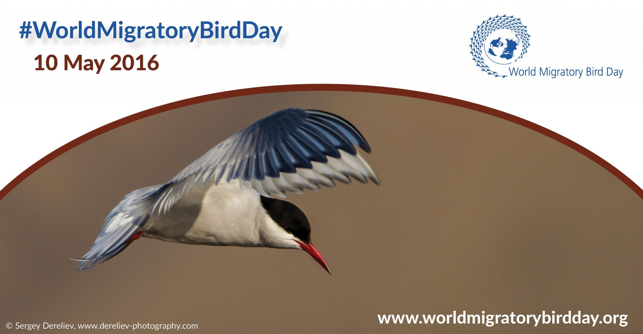 Image: World Migratory Bird Day