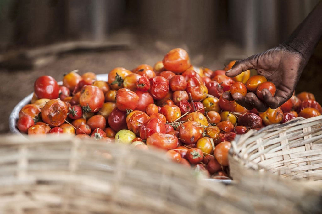Photo: Almost one-third of food produced for human consumption – approximately 1.3 billion tonnes per year – is either lost or wasted globally. Photo: FAO/Giulio Napolitano