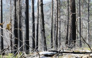 Photo: Evidence of a forest fire in Mykland, Norway.