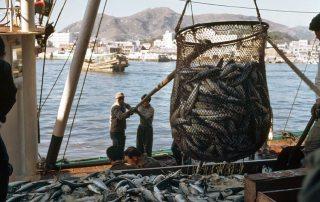 Fishermen unload their catch of mackerel at a fish market. UN Photo/M Guthrie