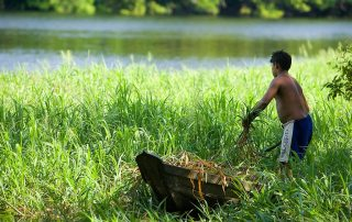 A resident of the National Tapajos Forest in Brazil collects wild foliage for preparing a meal. Photo: UN Photo/Eskinder Debebe