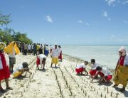 Mangrove shoots being planted on Tarawa, an atoll in the Pacific island nation of Kiribati to protect against coastal erosion. UN Photo/Eskinder Debebe