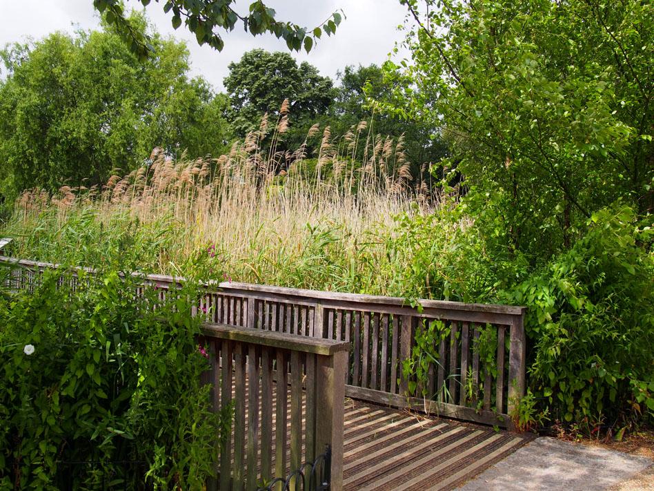 Regents Park 10 cosas que ver puente