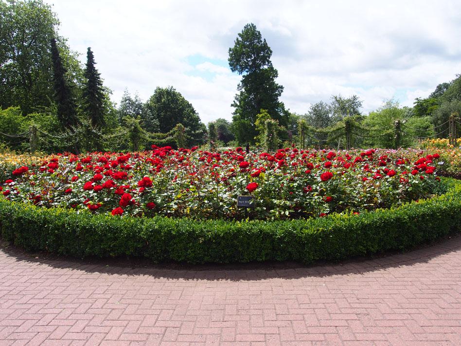 Regents Park 10 cosas que ver rosaleda
