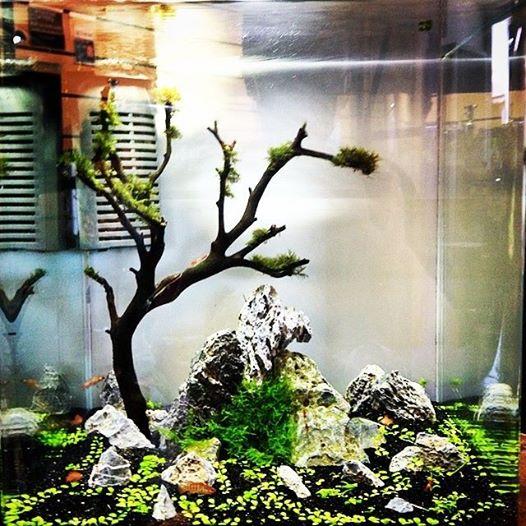 aquarium systems nano aquariums hardscape substrates decorations