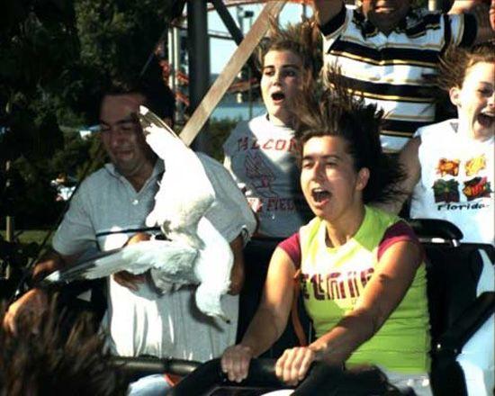 Bird Hit Roller Coaster