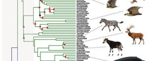 Phylogeny Of Mammalian Families – Phylogewhat?