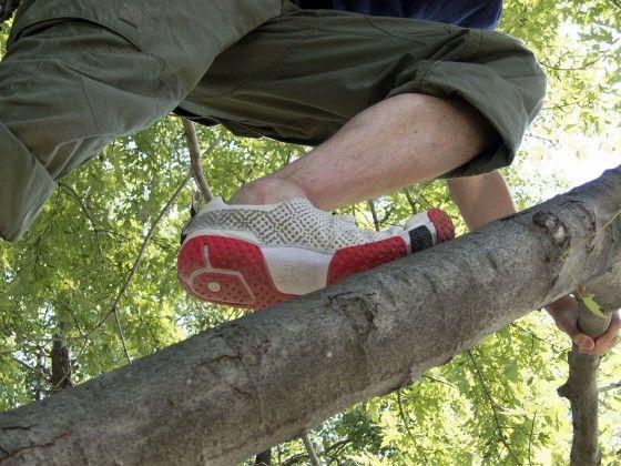 skora form in a tree