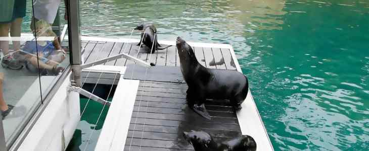 seals-on-futurewood