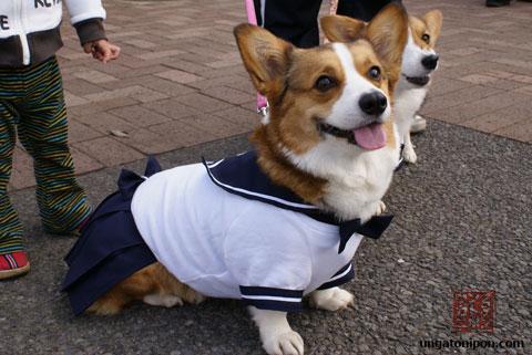 Perros vestidos de colegialas