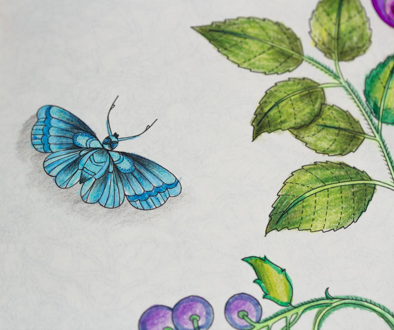 ideias jardim secreto:peq_jardim secreto pinturas ideias inspirações5