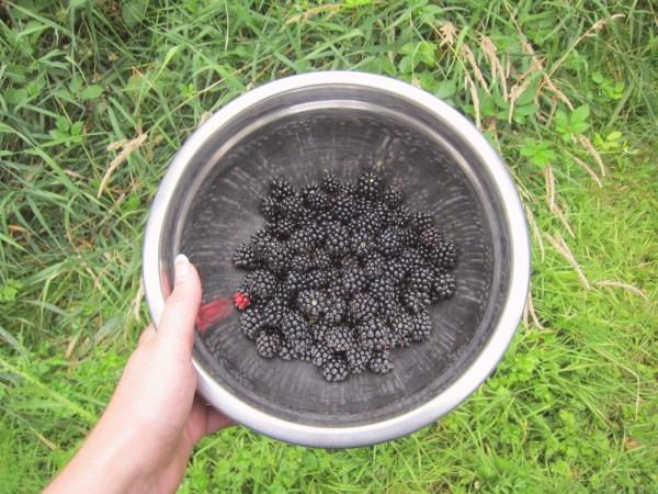 16blackberrybowl
