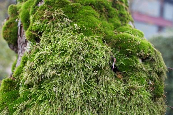 03 mossy tree