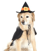 Halloween Costume Ideas For Big Dogs